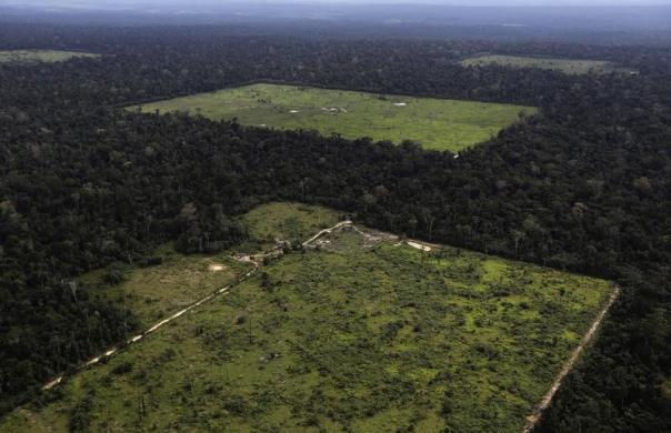 deforestazione.5jpg